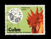 CUBA - CIRCA 1975: A stamp printed in the CUBA, shows dispharynx nasuta, circa 1975 — Stock Photo