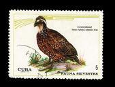 CUBA - CIRCA 1970: A stamp printed in the CUBA, shows codorniz, circa 1970 — Stock Photo
