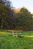 Wood autumn a bench — Stock Photo