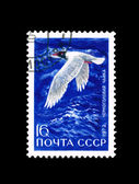 Postcard printed in the USSR shows Black-headed seagull., circa 1972 — Stock Photo