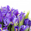 Bouquet of irises — Stock Photo #28851393
