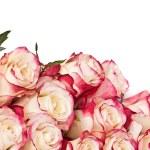růže — Stock fotografie #28851623