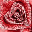 Frozen red — Stock Photo #28852089
