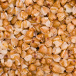 Buckwheat — Stock Photo #28859249