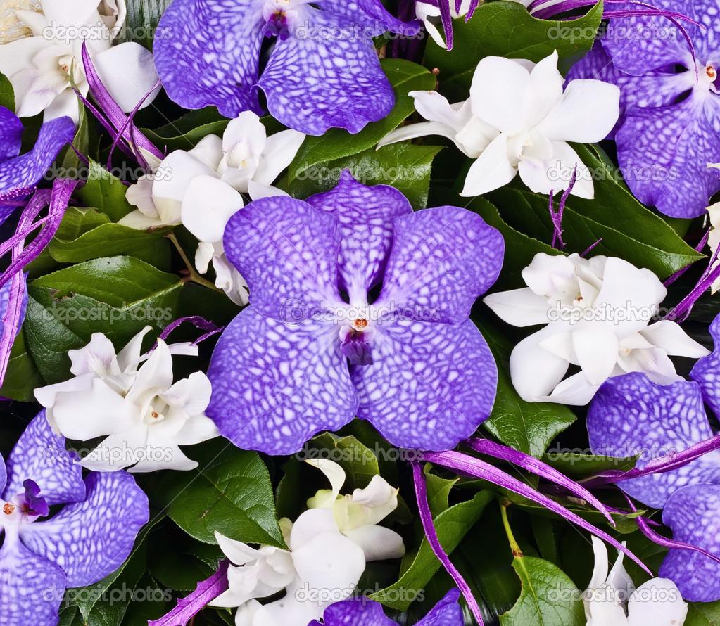 Ramo de orquídeas violetas y blancas \u2014 Foto de Stock 28869095