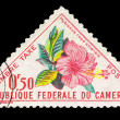 Stamp printed in Cameroun, shows Hybiscus rosa sinensis — Stock Photo