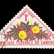 Stamp printed in Cameroun, shows Ipomoea sp — Stock Photo