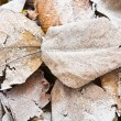 Frozen leaves — Stock Photo