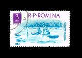 Sports racing on rowing water slalom — Stock Photo