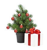 Christmas tree in a pot — Stock Photo