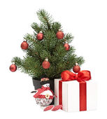 Christmas tree in a pot — Foto Stock