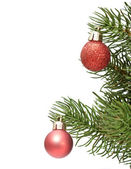 Balls on green spruce branch — Foto Stock