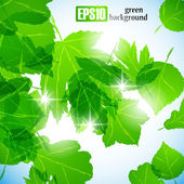Green leaves background — Stock Vector