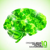 Human organic brain — Stock Vector