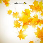 Podzimní pozadí — Stock vektor