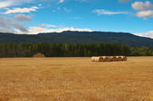Mown field with bales. — Stock Photo