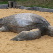 Wooden sea turtle in the sandbox. - Stock Photo