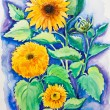 Yellow sunflowers, watercolor painting - Stock Photo
