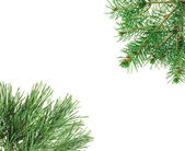 Frame made with pine twigs isolated on white, copyspaced — Stock Photo