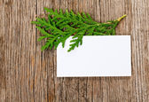 Wooden background with empty white card and green thuja branch — Stock Photo