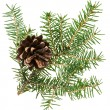 Christmas cone with fir branch, isolated on white - Stock Photo