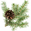 Christmas cone with fir branch, isolated on white - Stockfoto