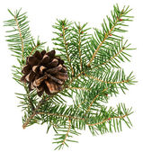 Christmas cone with fir branch, isolated on white — Stock fotografie