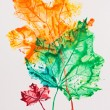 Maple leaves imprint, watercolor painting — Stock Photo