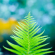 Fern branch close-up, shallow depth of field shot - Stock Photo