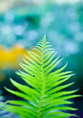 Fern branch close-up, ondiepe diepte van veld schot — Stockfoto