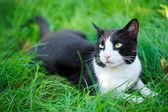 Lindo gato negro tirado en el césped de hierba verde — Foto de Stock