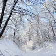 Winter forest road under crown of a trees covered with snow — Stock Photo
