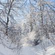 Stock Photo: Winter forest road under crown of a trees covered with snow