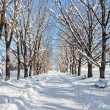Tree lined road in winter snow - Stockfoto