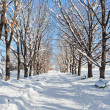 Tree lined road in winter snow - Stock Photo