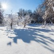 Snow winter landscape with two trees — Stok fotoğraf