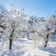 Winter landscape with two trees covered by hard snow and bright - Stock Photo