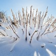 Snow covered bush in front of blue sky, wide angle view — Stock Photo