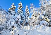 Kış ormanın derinliklerine tarafından sert kar k — Stok fotoğraf