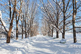 Tree lined road in winter snow — Stock Photo