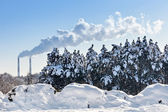 Industrial tubes smoke in front of blue sky and winter spruce fo — Stock Photo
