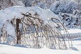 Decorative dwarf tree covered by hard snow — Stock Photo