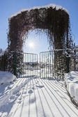 Winter garden entrance with quickset gate, bright sun and beauti — Stock Photo