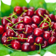 Many red wet cherry fruits (berries) on green leaves in round pl - Stockfoto