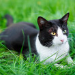 Cute black cat lying on green grass lawn — Stock Photo