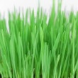 Rotating fresh new green grass bunch with shallow depth of field on white. — Stock Video