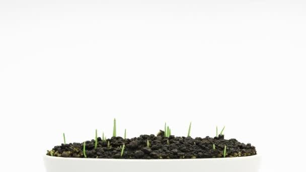 Acelerado crecimiento de la hierba verde fresca nueva — Vídeo de stock
