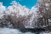 Infrared (IR) photography landscape with forest road — Stock Photo