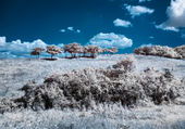 Infrared (IR) landscape with trees on the hill — Stock Photo