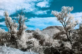 Infrared (IR) landscape with two trees and mountain — Stock Photo